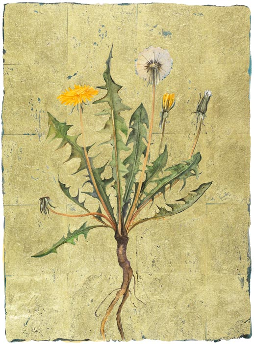dandelion | the lost words