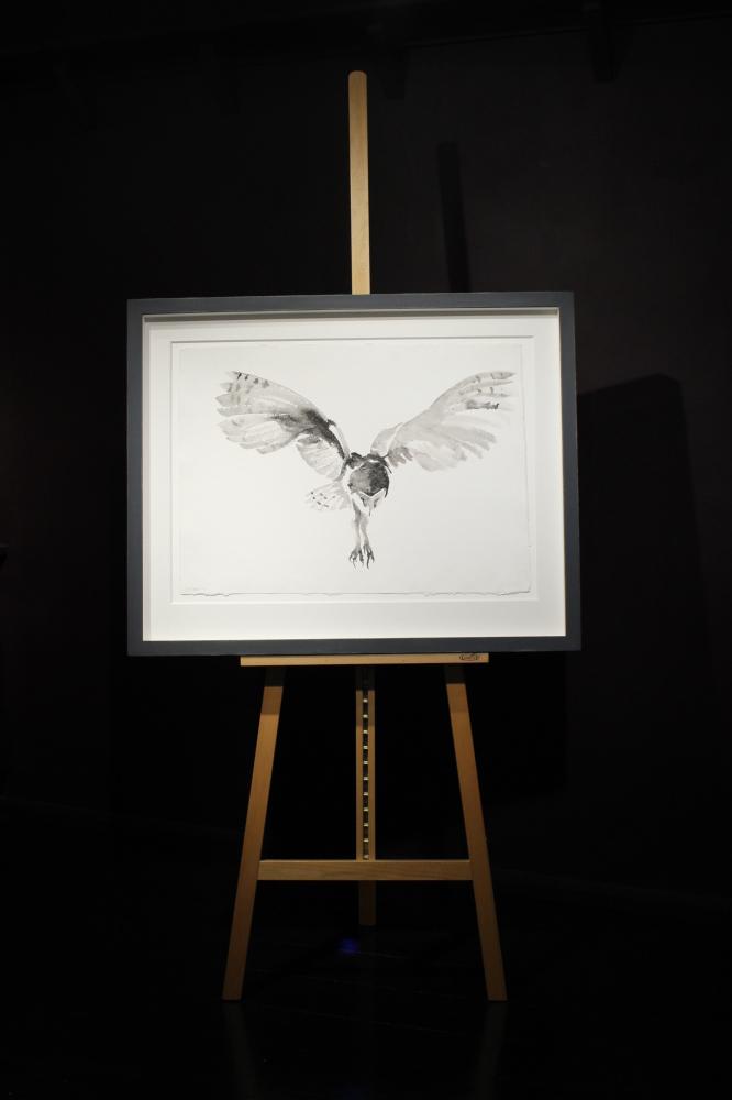 Barn Owl | Spell Songs