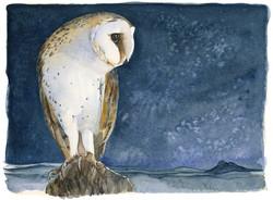 barn owl | the lost spells