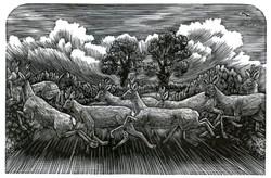 roe deer rushed