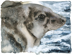 grey seal | the lost spells