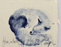 where blue fox curls