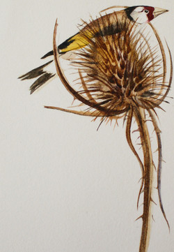 goldfinch | the lost words