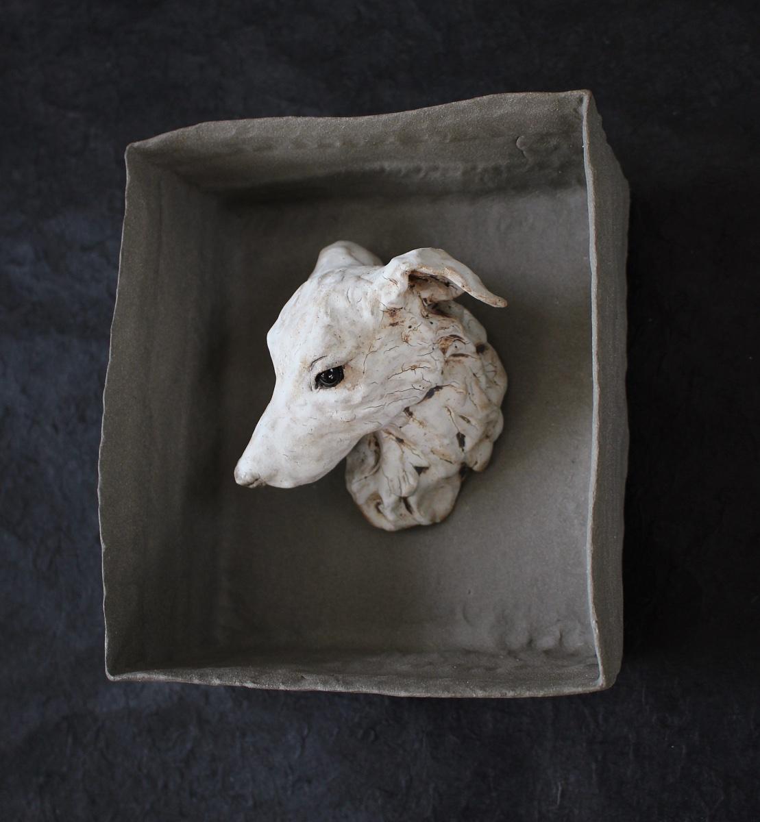shy hound