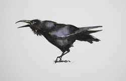 the wild swans | raven