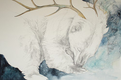 dreams of the white bear