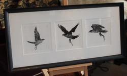 peregrine print triptych