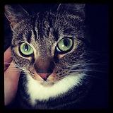 Them eyes! #cat #eyes #kitty #beautiful.