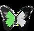 Papillon pharma.png