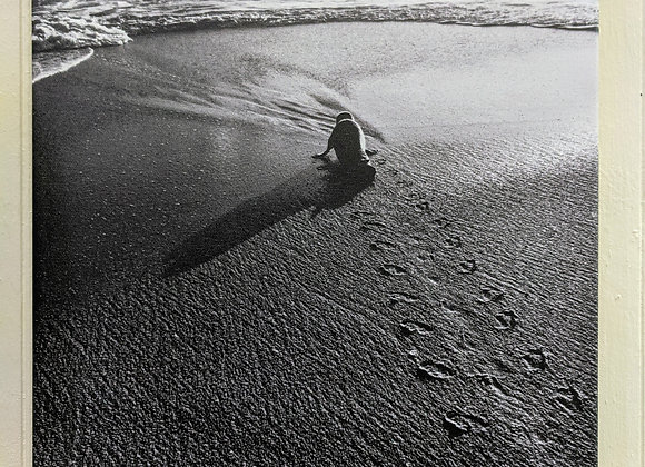 Photography - Seal on the Beach in Black and White Wall Art