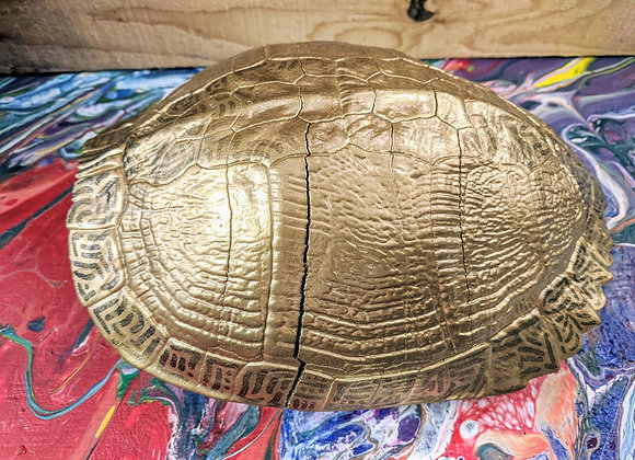 Gold Turtle Shell - Home Decor