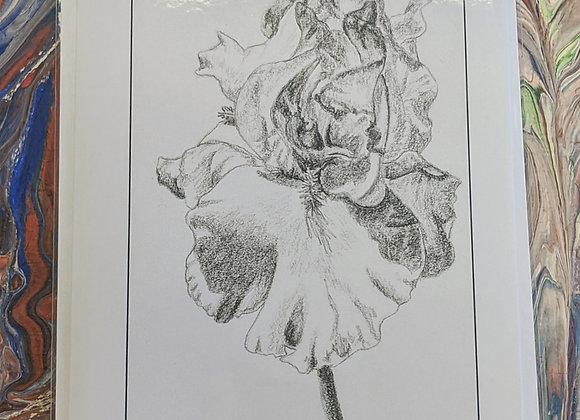 Iris Sketch Print