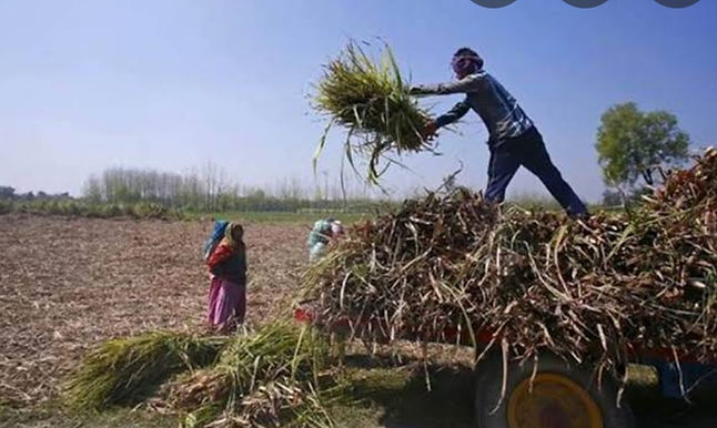 Nabard to disburse Rs 1.20 lakh crore crop loan this fiscal