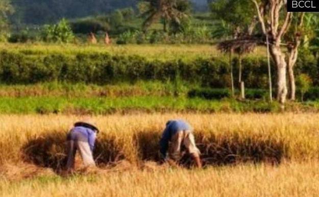 """""""Govt buys paddy worth Rs 1.26 lakh crore at MSP so far this kharif marketing season"""""""