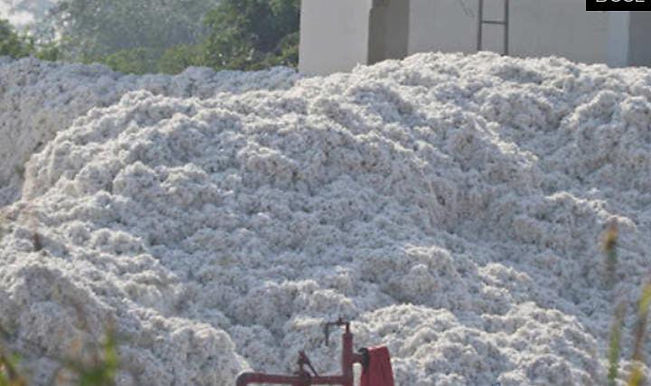 """""""India's cotton exports likely to rise 50% this year to 75 lakh bales this year"""""""