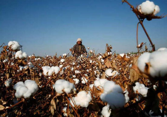 """""""AEPC urges govt to put restrictions on cotton yarn exports"""""""