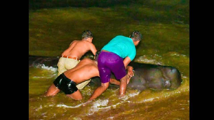 Sri Lankan villagers and navy rush to rescue about 100 stranded whales from coast: