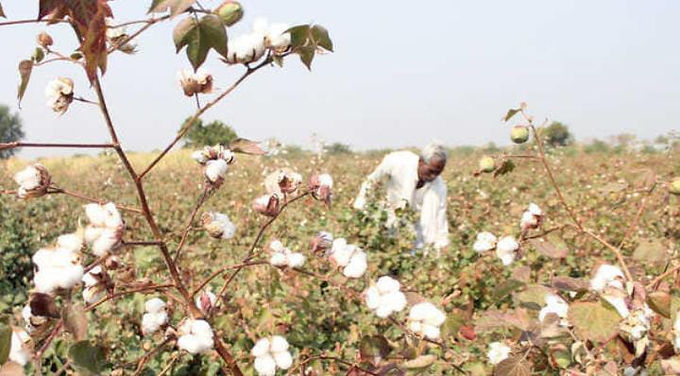 """""""Cotton industry is trying to poach farmers to increase acreage as farmers may opt for edible oils due to record prices"""""""