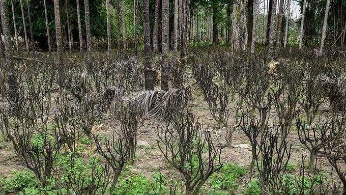 No biodiversity study done yet for drilling inside Assam's Dibru-Saikhowa national park, OIL tells Gauhati HC: