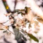 boudha%20fleurs_edited.jpg