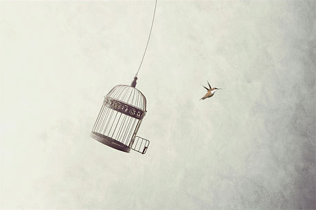 little%20birds%20escape%20out%20of%20birdcage%2C%20freedom%20concept_edited.jpg