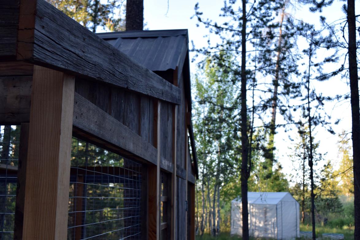 Coop-Roof Line