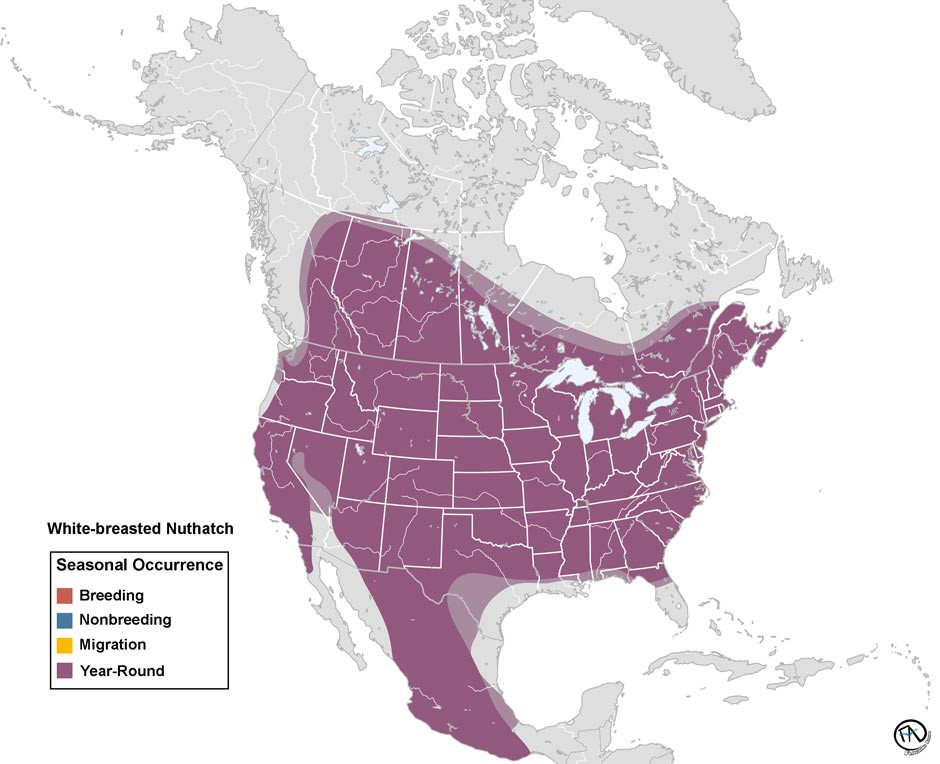 White-breasted Nuthatch Range Map