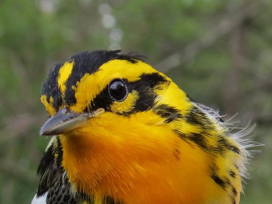 Birding in Wyoming: Hotspot Highlight at Camplex Park