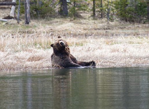 Bear Safety and Attack Prevention