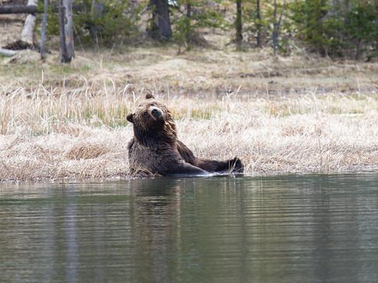 Bear Safety - Bear Spray - Bear Attack Prevention