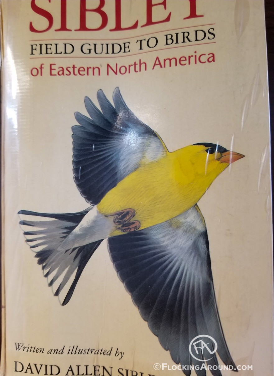 """The """"Golden Sibley"""" - A product of extreme birding... or possibly a terrible accident"""