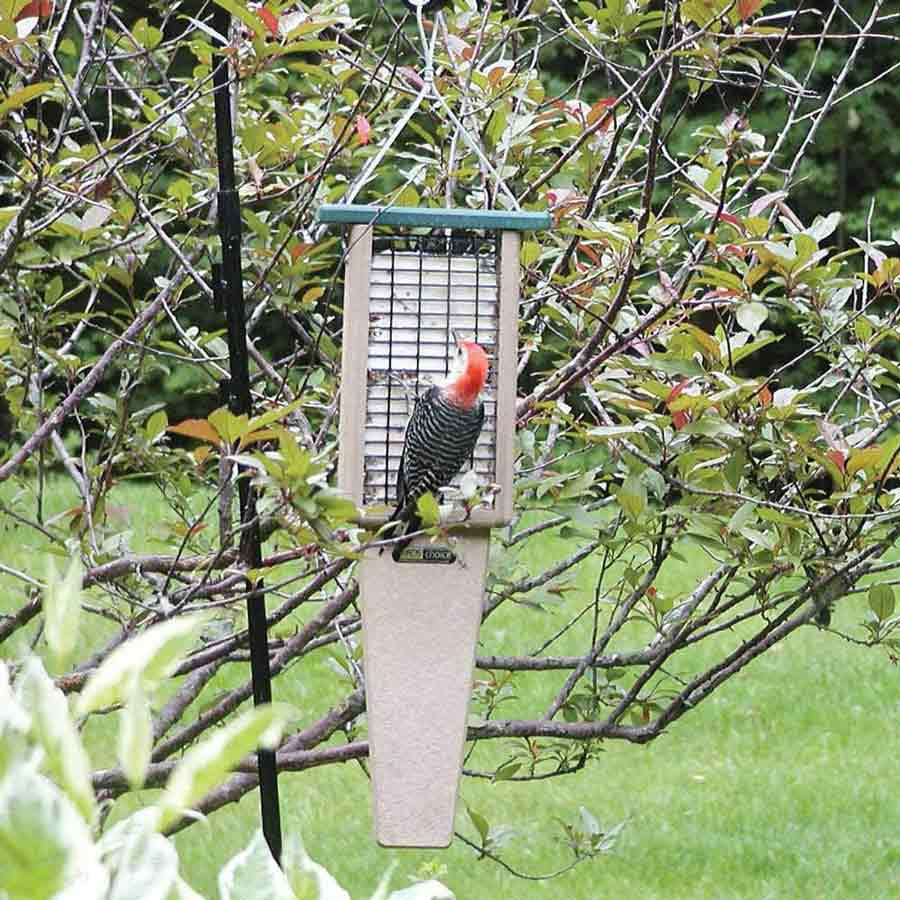 Best Large Suet Feeder for Pileated Woodpeckers and other large woodpeckers