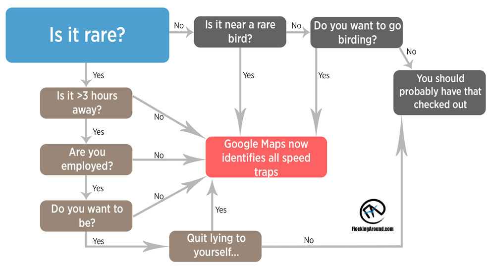 Rare Bird Flow Chart for Chasing