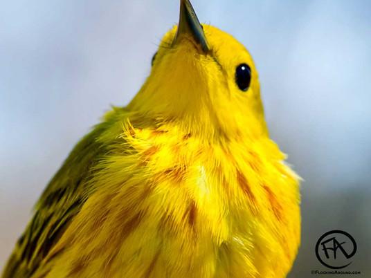 Birding in Edness Kimball Wilkins State Park
