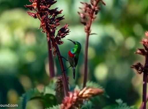 Are you a birdwatcher or a birder?