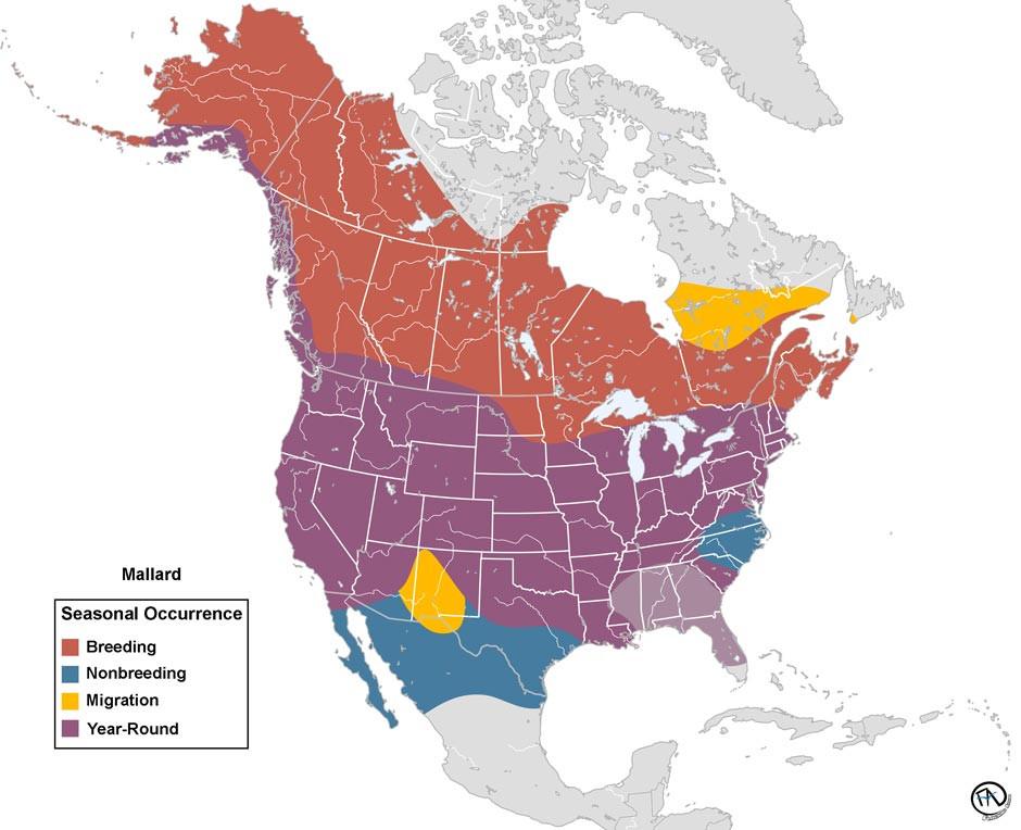 Mallard Range Map