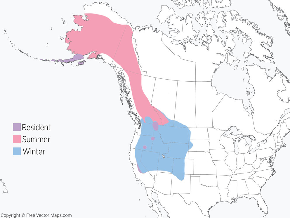 Gray-crowned Rosy-Finch Range Map