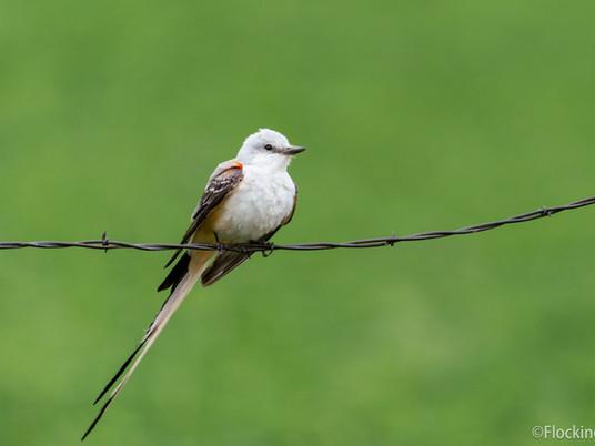 How to document a rare bird sighting