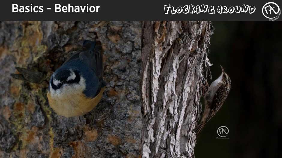 Bird Identification by Behavior