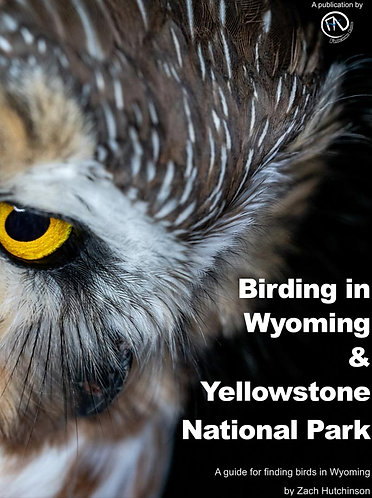Birding in Wyoming and Yellowstone National Park