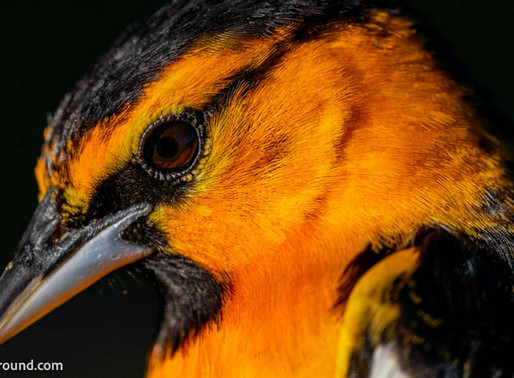 Take Better Bird Photos - The Guide to the Best Cameras for Birding
