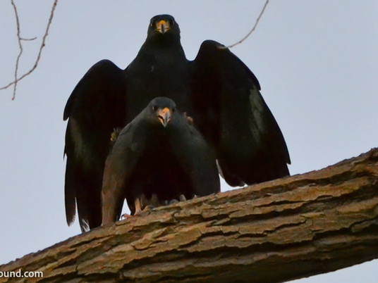 Birding in Big Bend National Park