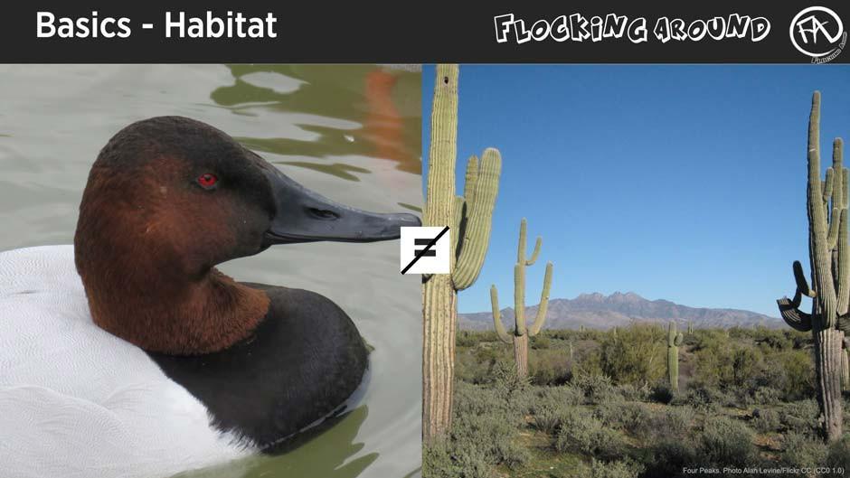 Bird Identification by Habitat