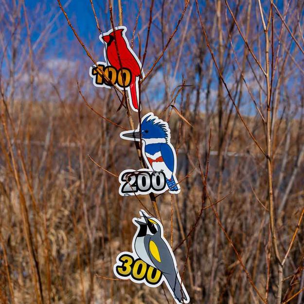 Birding Stickers to show off your life birds!