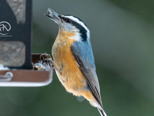 The Best Bird Feeders (2021) - Which bird feeder should you buy?