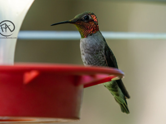 The best hummingbird feeders (2021) - A guide to buying hummingbird feeders