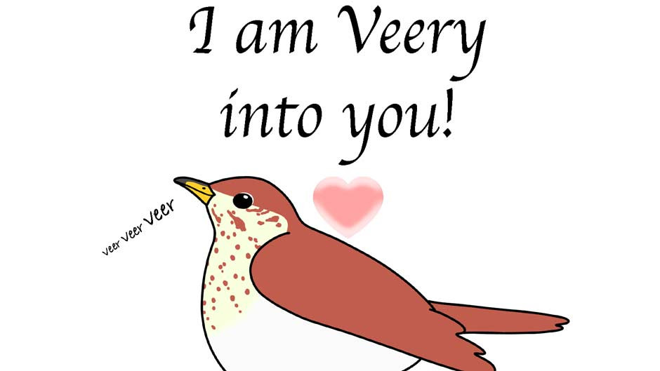 I am Veery into you! Bird Valentine's Day Card