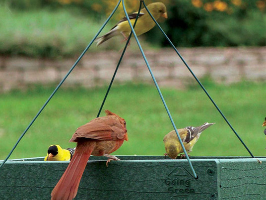The best platform feeders of 2021 - Use a platform feeder to attract cardinals, finches, and more!