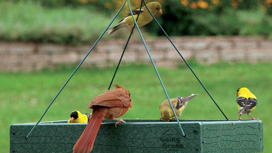 Platform feeder for finches: Going Green Platform Feeder