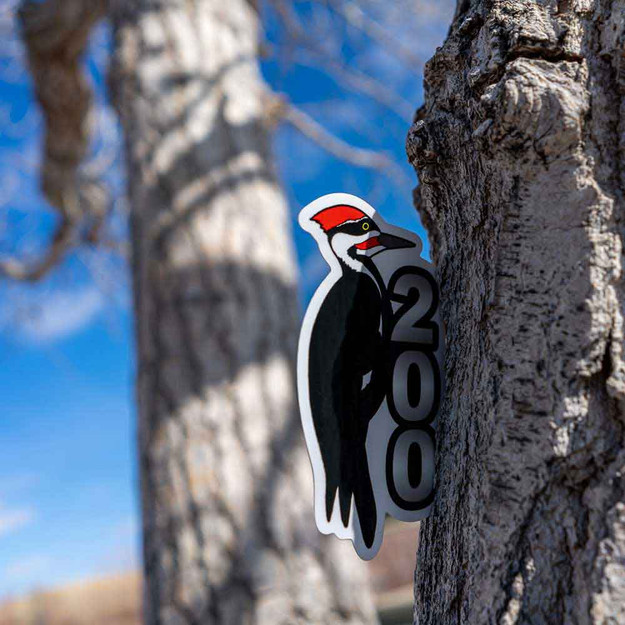 This Pileated Woodpecker is a great way to celebrate 200!